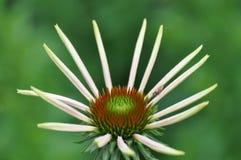 Kwiat na zielonym tle Zdjęcia Royalty Free