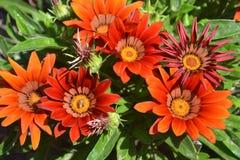 kwiat, natura, kwiaty, kwiatu pączek, pączkuje, słonecznik, lato, płatek, flora, rolnictwo, makro-, stokrotka, projekt, textured obrazy stock