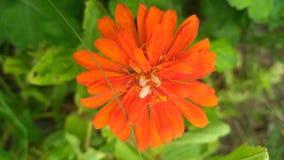 Kwiat Natura Liście Tło Obraz Stock