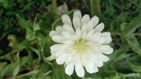 Kwiat Natura Liście Tło Zdjęcie Stock