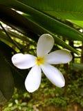 Kwiat - natura & Piękny fotografia stock