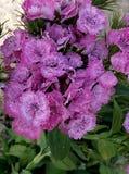 Kwiat natura pi?kno zdjęcia royalty free