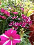 Kwiat natury okwitnięcia zima urocza Zdjęcia Stock