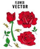 Kwiat natury róża folujący hD ilustracji