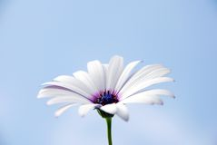 kwiat niebo obraz stock