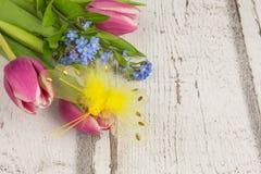 Kwiat niezapominajka i tulipany Zdjęcie Royalty Free