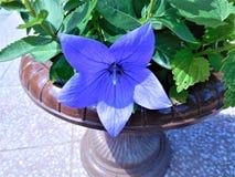 kwiat od ogródu Zdjęcia Stock