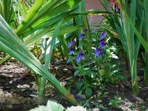 kwiat od ogródu Obrazy Royalty Free