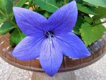 kwiat od ogródu Obrazy Stock