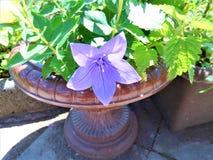 kwiat od ogródu Obraz Royalty Free
