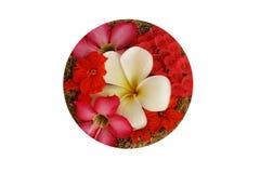 Kwiat odizolowywa Zdjęcia Stock
