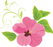kwiat odizolowywający różowy biel royalty ilustracja