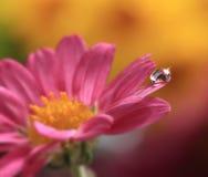 kwiat opadowa woda Obraz Stock