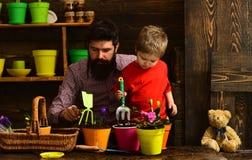 Kwiat opieki podlewanie Glebowi u?y?niacze szcz??liwe ogrodniczki z wiosna kwiatami Ojciec i syn Ojca dzie? Rodzinny dzie? obrazy stock