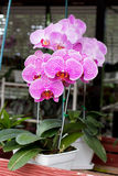 kwiat orchidea Obrazy Stock