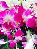 kwiat orchidea Fotografia Stock