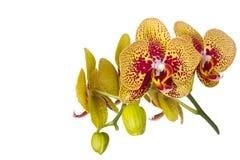 kwiat orchidei piękna zdjęcia royalty free