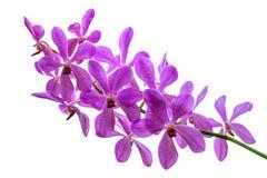 kwiat orchidei piękna Fotografia Stock