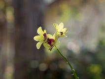 kwiat orchidei piękna obraz stock