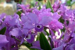 kwiat orchidei piękna Zdjęcie Royalty Free