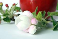 kwiat owoc Obrazy Stock