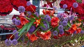 Kwiat parada Obrazy Royalty Free