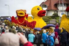 Kwiat parada w holandiach przy wiosną Obraz Royalty Free