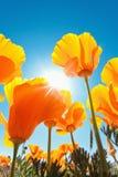 kwiat piękna wiosna zdjęcia royalty free