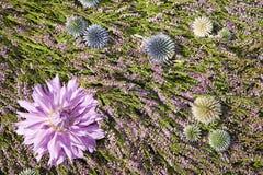 kwiat piękne kolorowe rośliny Obraz Stock