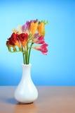 kwiat piękna frezja Zdjęcia Stock