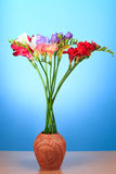 kwiat piękna frezja Fotografia Royalty Free