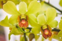 kwiat piękna orchidea Zdjęcie Stock
