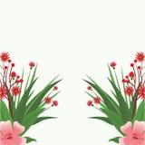 kwiat piękna rama Fotografia Royalty Free