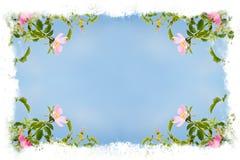 kwiat piękna rama Zdjęcie Royalty Free
