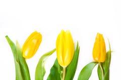kwiat piękna wiosna Zdjęcie Royalty Free