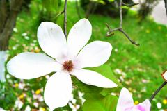 Kwiat, piękno i kolor, Fotografia Stock