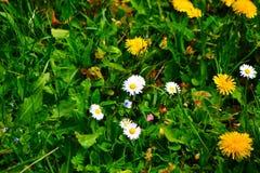 Kwiat, piękno i kolor dlue, Fotografia Royalty Free