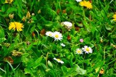 Kwiat, piękno i odór, Zdjęcia Stock