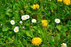 Kwiat, piękno kolor Zdjęcie Stock