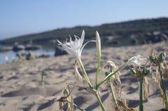 Kwiat plaża Fotografia Stock