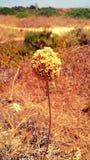 Kwiat plaża Obraz Stock