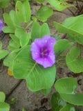 Kwiat plaża obraz royalty free
