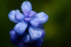 Kwiat po deszczu Fotografia Royalty Free