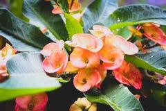 Kwiat po deszczu Zdjęcia Royalty Free