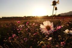 Kwiat pod zmierzchem zdjęcia stock