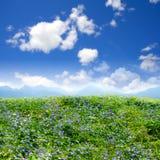 kwiat pola zielone piękna Zdjęcie Stock