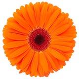 kwiat pomarańcze Zdjęcia Stock