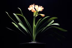 kwiat pomarańczowa roślinnych Obraz Royalty Free