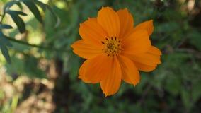 kwiat pomarańczy piękna Zdjęcia Royalty Free