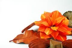 kwiat pomarańcze Zdjęcia Royalty Free